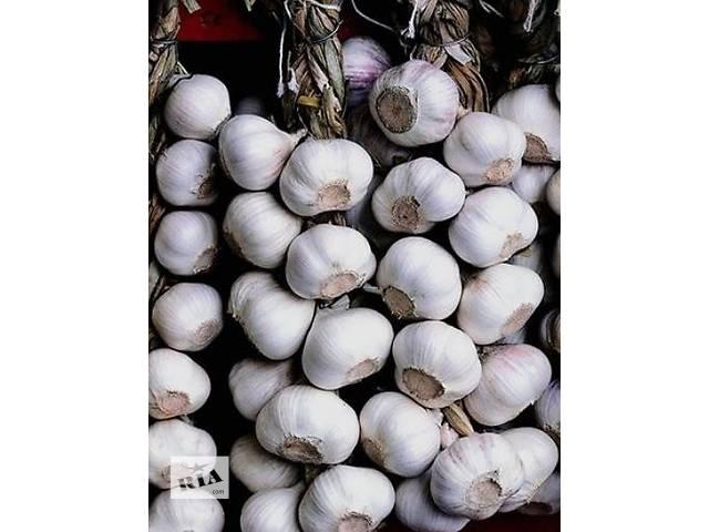 купить бу Продаю посадочный сортовой чеснок в Чернигове