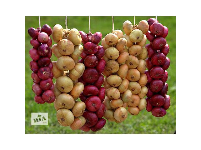 Продаю лук и капусту- объявление о продаже   в Украине