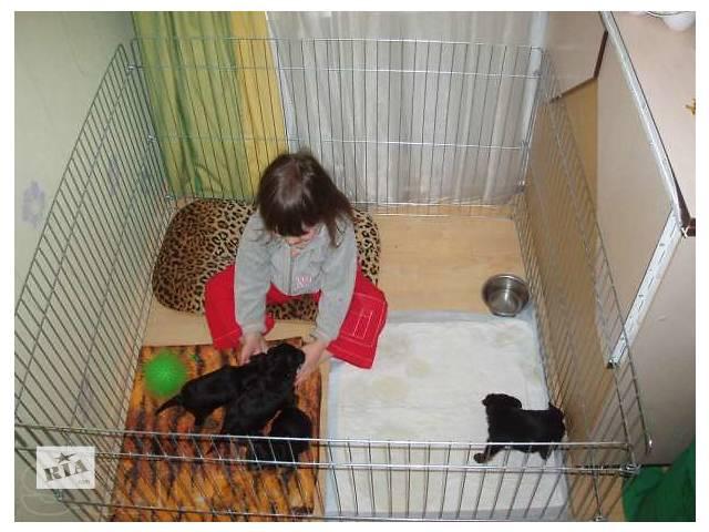 Клетка для собаки своими руками в домашних условиях