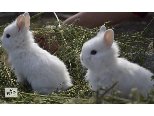продам Декоративные кролики бу в Тернополе