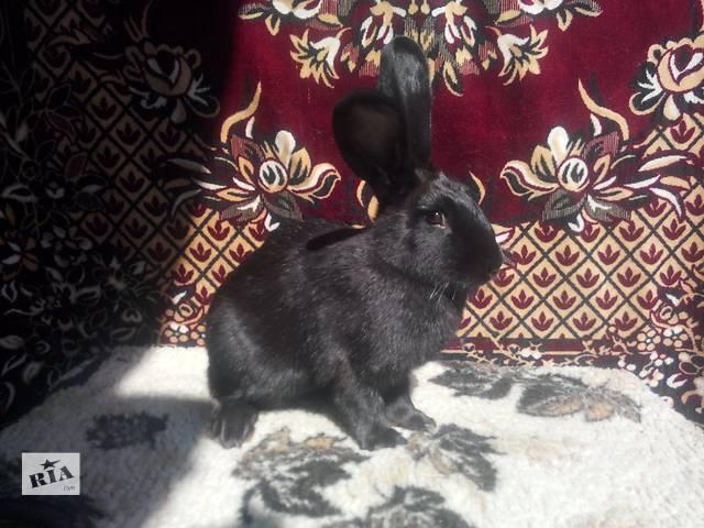 Продаются кролики разных пород- объявление о продаже  в Гайсине