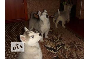 купить бу Домашние животные Винница