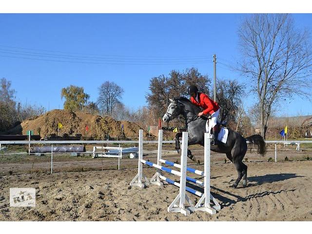 бу Продажа молодых спортивных лошадей в Черкассах