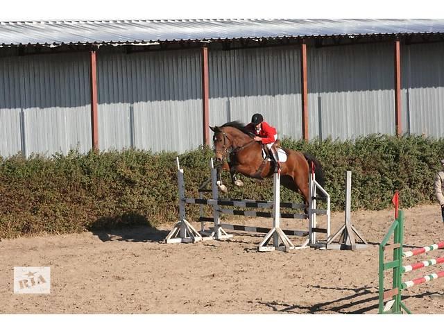 купить бу Продажа молодых спортивных лошадей в Черкассах