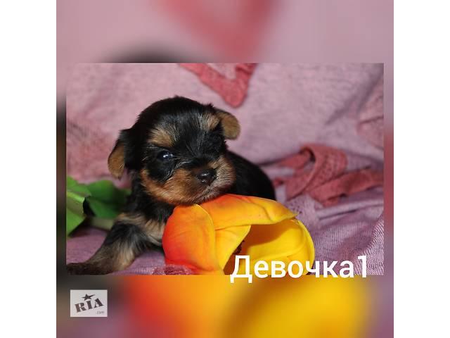 продам Продажа йорков  бу в Харькове