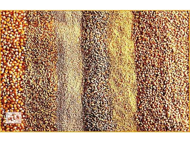 Продажа зерна и комбикорма- объявление о продаже  в Донецке