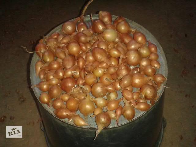 купить бу Реализую севок лука, сеянку, арпаш оптом по Украине в Измаиле