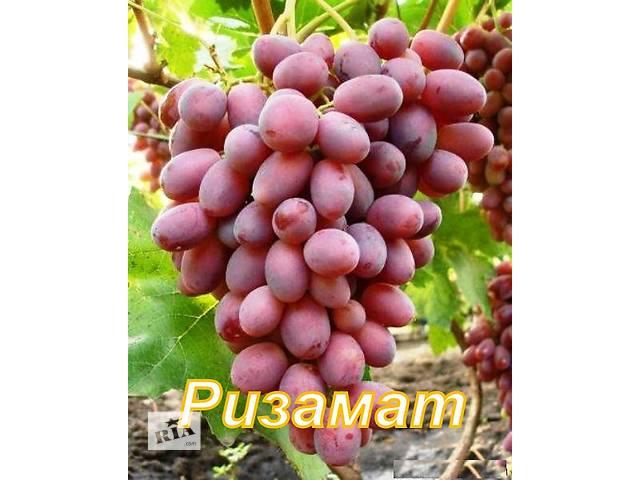 продю саженцы винограда- объявление о продаже  в Николаеве