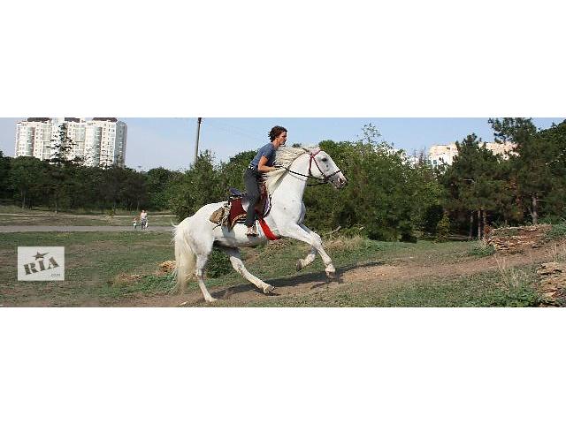 купить бу Прокат лошадей,верховая езда Одесса в Одессе