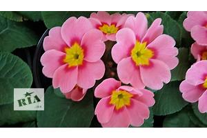 Нові Гарноквітучі рослини