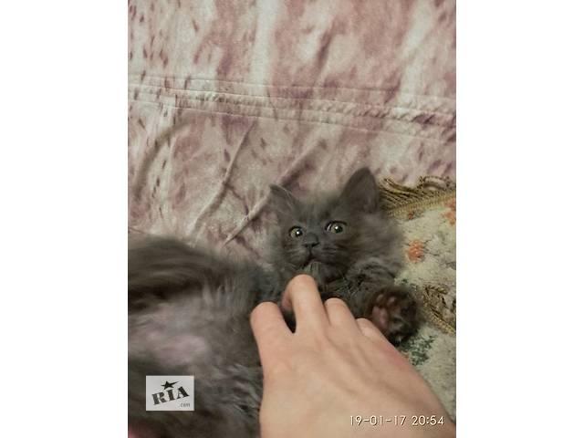 продам Пушистый малыш бу в Киеве