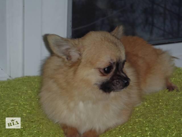 купить бу Питомник распродает собак в Киеве