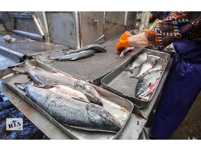 купить бу Работа в Чехии для мужчин и женщин на рыбном заводе  в Украине