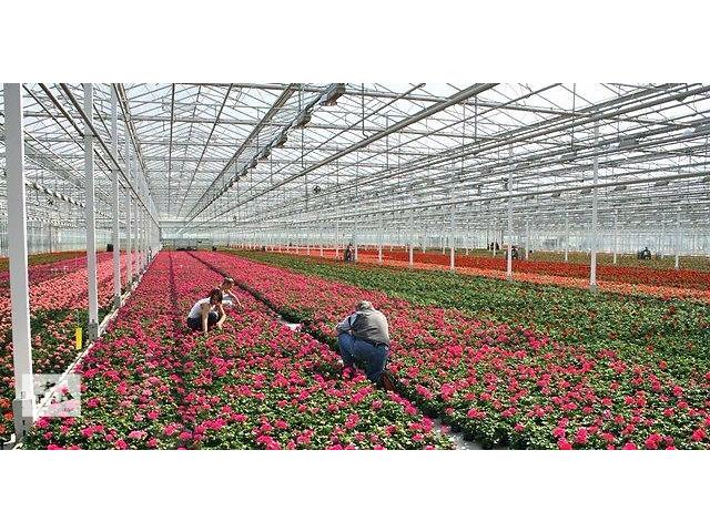 продам Работа в Польше на цветочных теплицах  бу  в Украине