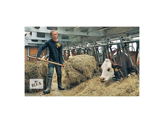 купить бу Работники на ферме в Польшу  в Украине