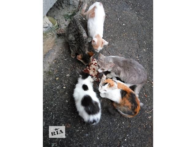 купить бу Раздам котят в Виннице