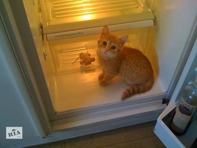 Ремонт холодильников на дому у заказчика по Харькову.- объявление о продаже  в Харькове