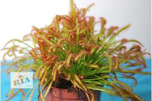 Новые Комнатные растения, цветы