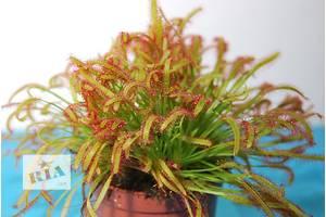 Новые Насекомоядные растения