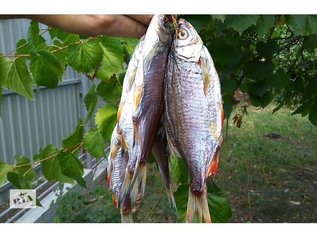 Рыба тарань азовская малосольная вкусная!- объявление о продаже  в Бердянске