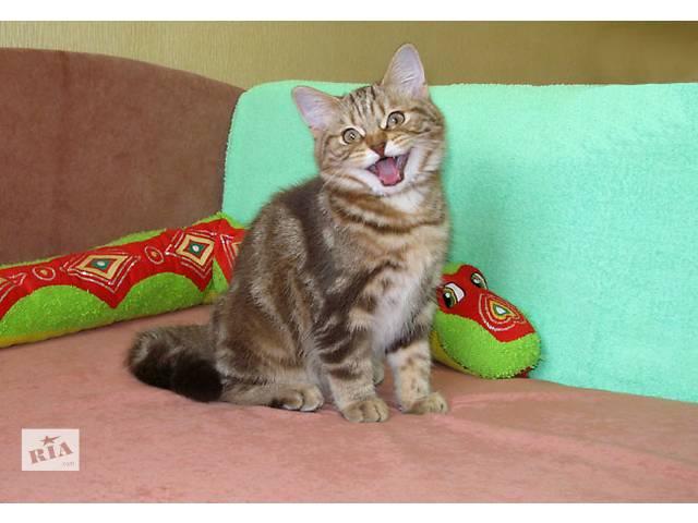 бу Рисунчатый плюшевый страйтик. Ласковый, общительный котенок. в Киеве