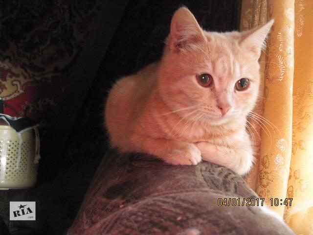 Котенок Рыжик!!Киев!!!- объявление о продаже  в Ровно