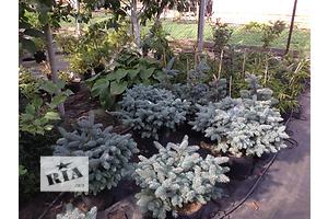 продам Комнатные растения, рассада и цветы в Днепропетровске бу Днепропетровск