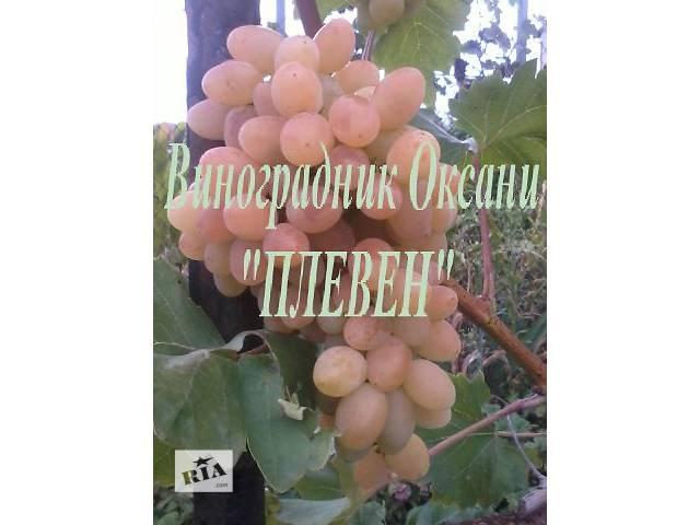купить бу Саженцы винограда в Тернополе