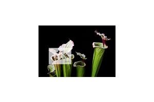 Нові Кімнатні рослини, квітки