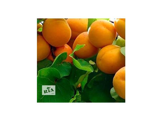 бу саженцы абрикоса оптом в Запорожье