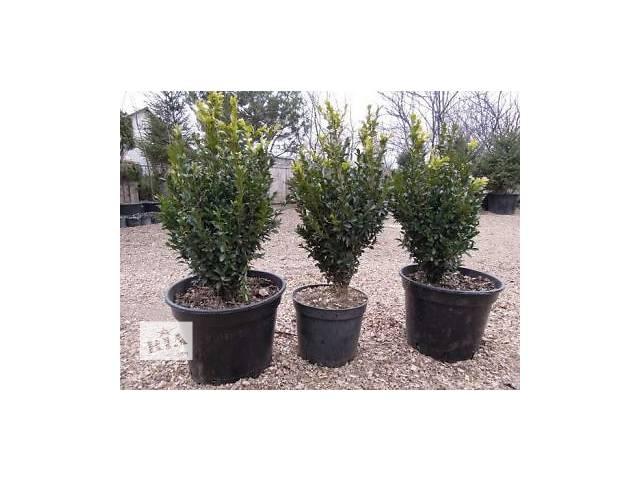 купить бу Саженцы деревьев с доставкой и посадкой в Харькове