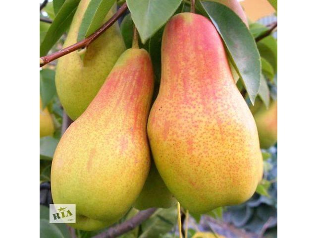 продам Саженцы элитных сортов плодово ягодных более 400 товаров питомник. бу в Харькове