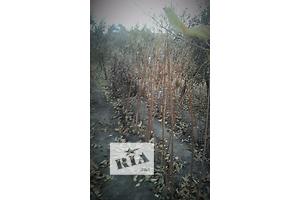 бу Комнатные растения, рассада и цветы в Днепропетровске Днепропетровск