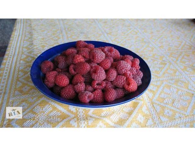 Саженцы малины сорт Таруса (малиновое дерево) бесшипная- объявление о продаже  в Черкассах