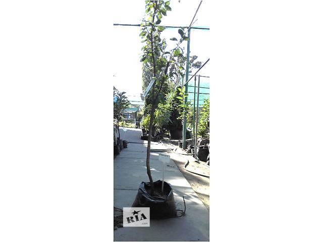 Саженцы плодовых деревьев (3-х-летние) с закрытым корнем- объявление о продаже  в Киеве