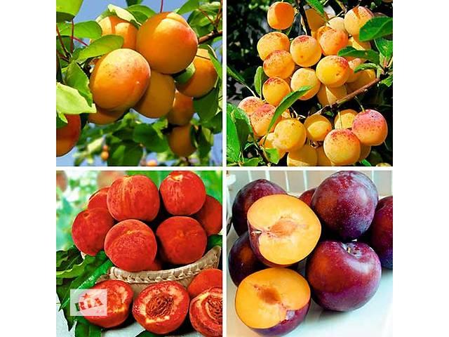 продам Саженцы плодовых яблоня,груша,слива,вишня,черешня,персик,абрикос и т.д бу в Харькове