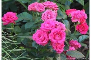 Красивоцветущие растения