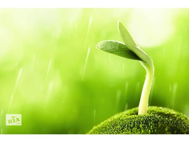 купить бу Саженцы дуба, ели, сосны, березы, вишни, сливы, рябины, липы, калины и др. в Чернигове