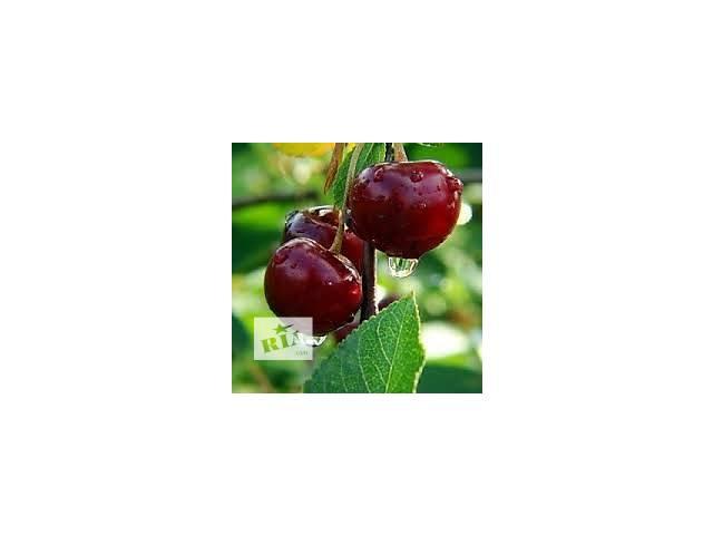 купить бу Саженцы фруктовых деревьев в Акимовке