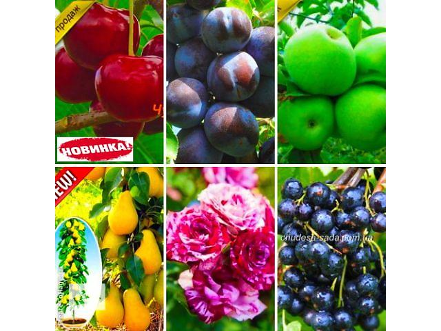 Саженцы плодово ягодных культур- объявление о продаже  в Днепре (Днепропетровске)