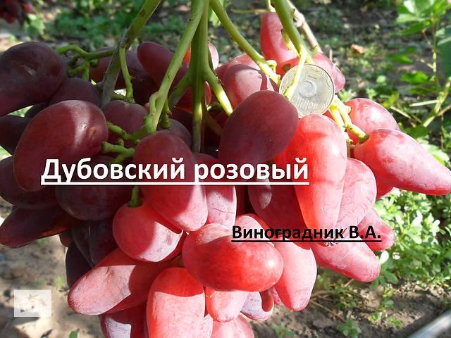 бу Саженцы и лоза Новых перспективных сортов винограда в Днепрорудном
