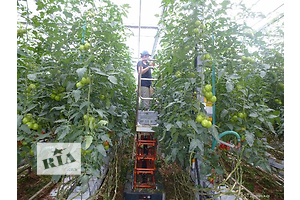 Сельскохозяйственная сфера Работник теплицы Работа за границей Полный день Полная занятость