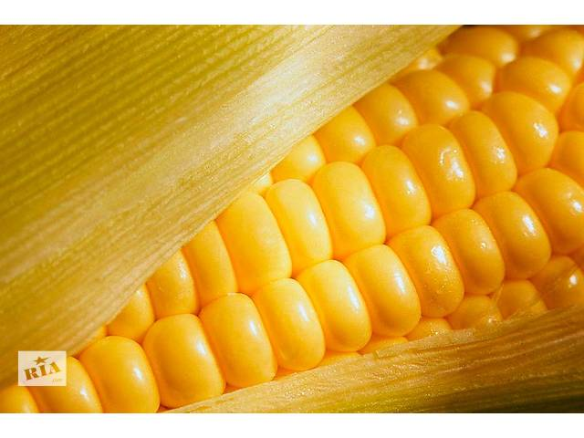 продам Семена кукурузы Кадр 267 бу в Пятихатках
