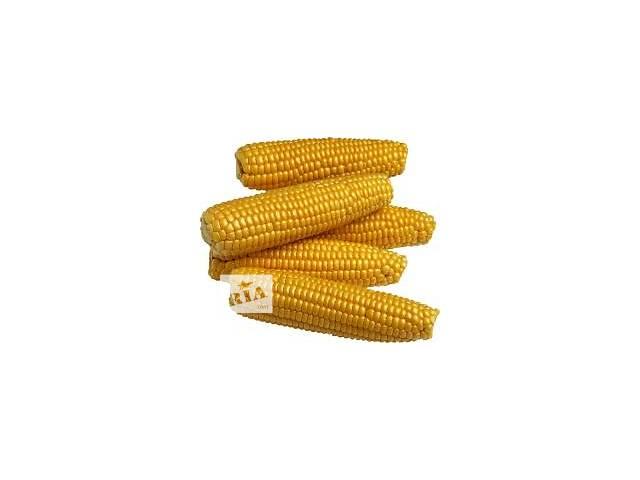 купить бу Семена Кукурузы. в Кропивницком (Кировограде)