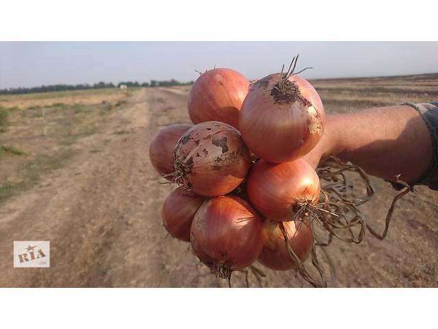 Семена лука Банк F1- объявление о продаже  в Черноморске (Ильичевск)