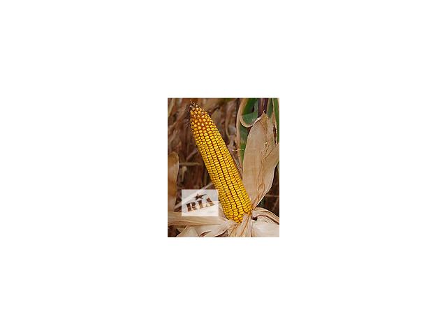 продам Семена кукурузы Гарантия, Танго, Слобожанский, Лелека бу в Харькове