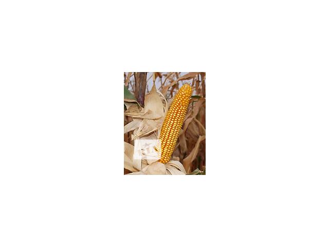 Семена кукурузы Гарантия, Танго, Слобожанский, Лелека- объявление о продаже  в Харькове