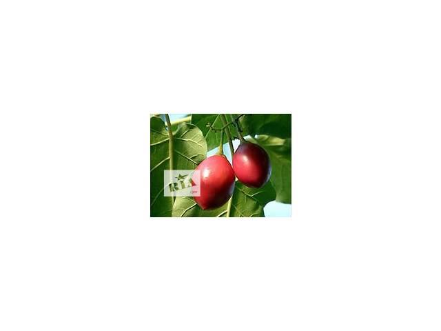 бу Семена, семена помидорного дерева цифомандра. в Полтаве