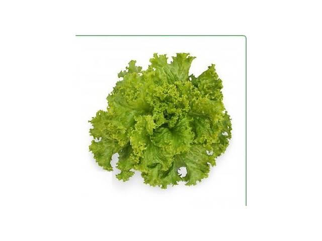 купить бу Семена салата KS 129 (Китано) в Киеве