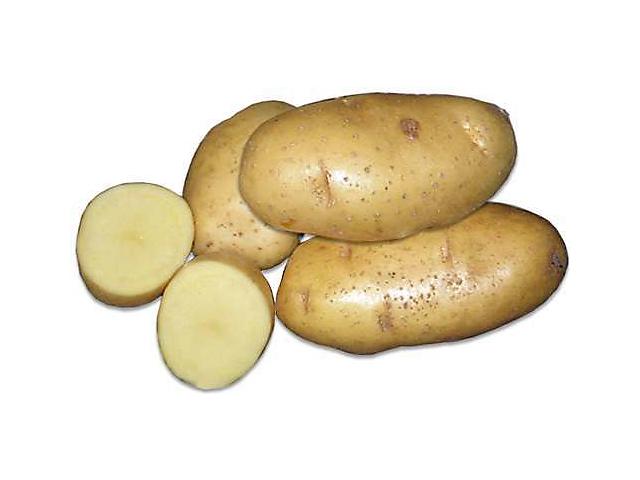 где купить цветки картофеля: